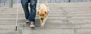 Guide dog on steps